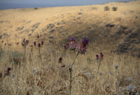 Hiking in the Golan Heights